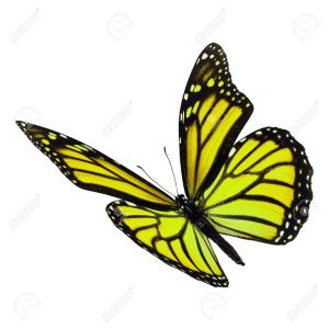 50362184-beautiful-yellow-monarch-butterfly-flying-isolated-on-white-background